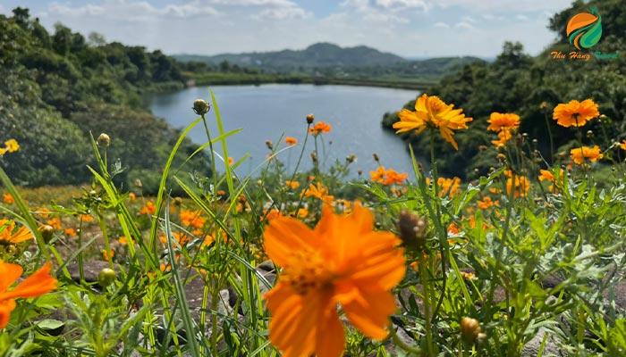 hoa rừng ở Thiên Sơn