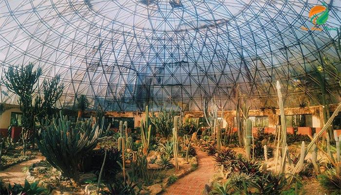 Cảnh vườn xương rồng tại Vườn Quốc Gia Ba Vì