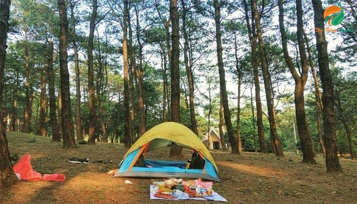 Cắm trại ở khu vực đồi thông