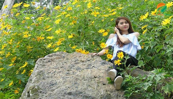 Hoa dã quỳ Ba Vì mang nét đẹp bình dị, đơn giản