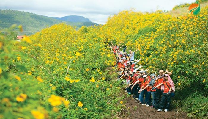 Hoa dã quỳ - loài hoa đặc trưng ở Ba Vì