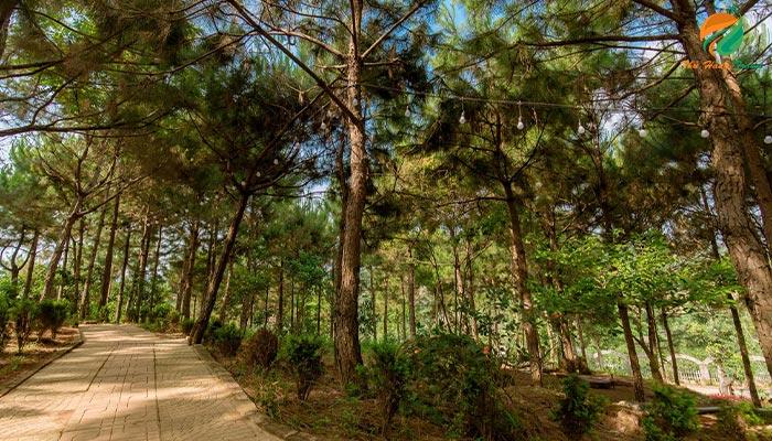 rừng thông cắm trại ở Eduland Ba Vì